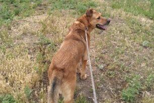 Jasper (2)