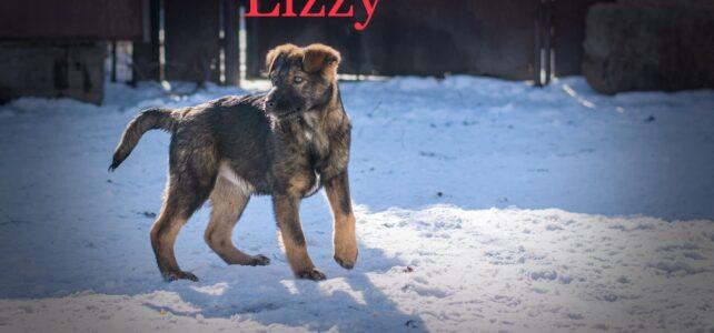 Lizzy (2)