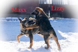 Maxx + Lizzy (2)