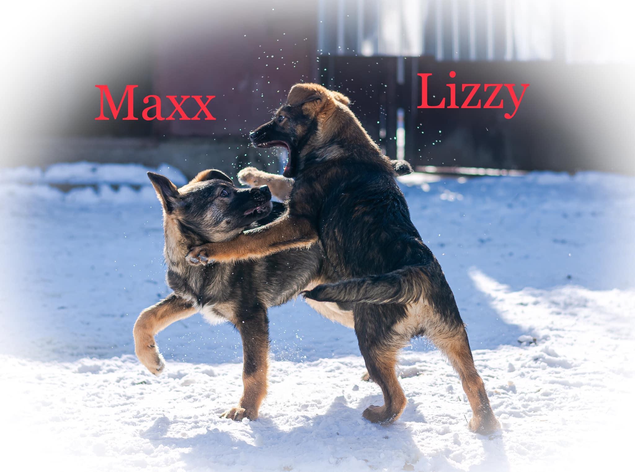 Maxx 2