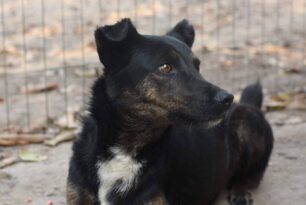 Tuffy *reserved*