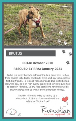 Brutus Food Sponsor Card