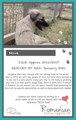 Nova Food Sponsor Card